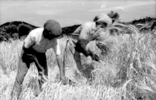 Boj o přízeň venkova – i tak by se dalo shrnout úsilí politických stran v období Třetí republiky. Jaký vliv měla na rozhodování venkovských voličů konstrukce jejich mediálního obrazu?